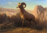 Albert Bierstadt - paintings - A Rocky Mountain Sheep Ovis Montana