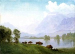 Albert Bierstadt - paintings - Buffalo Country