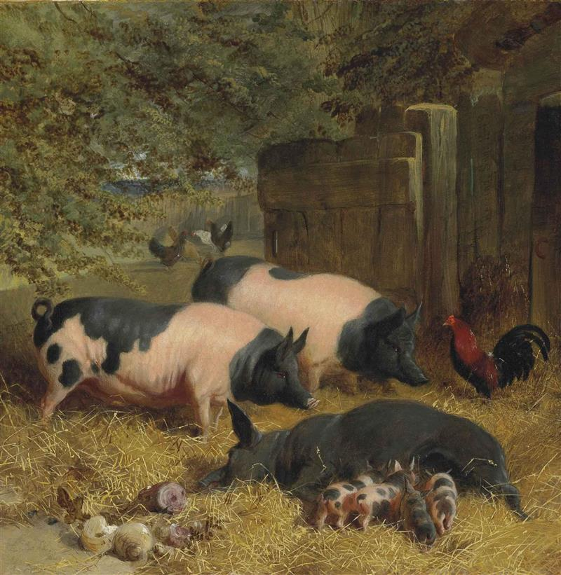 Berkshire Saddlebacks and Chickens in a Straw-bedded Yard